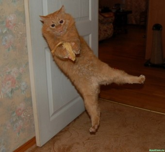 Заросший кот